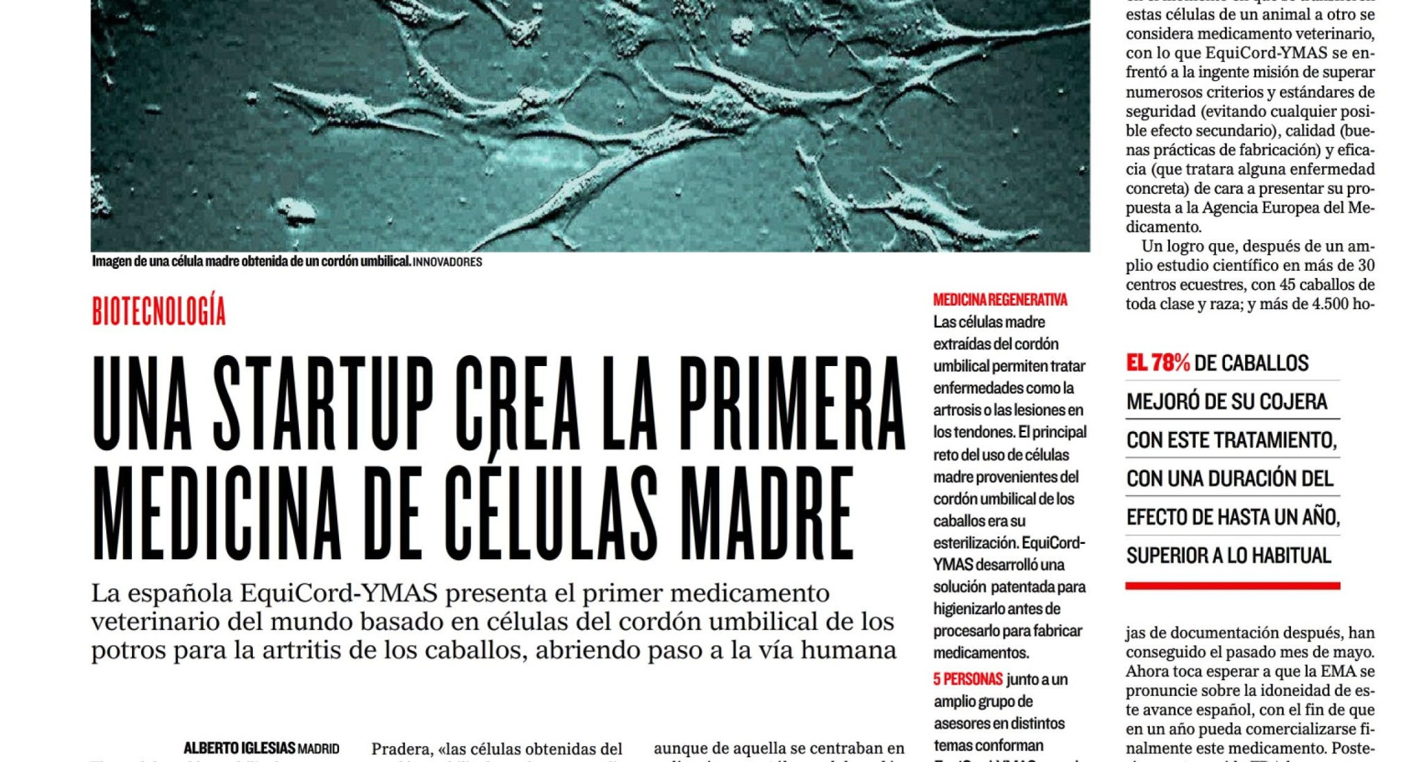 Cordón umbilical como medicamento veterinario de células madre